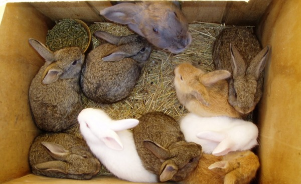 Крольчата перед отсадкой