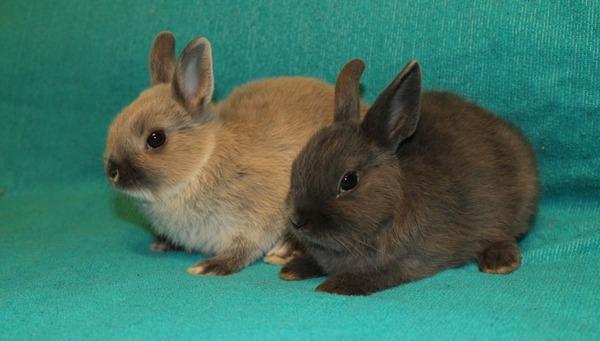 Маленький кролики карлики