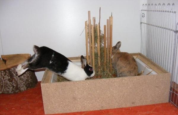 Кролики в доме