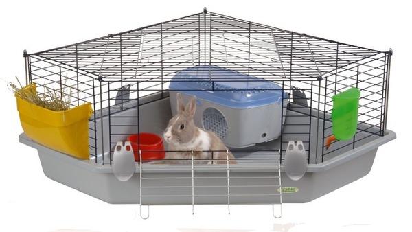 Декоративный кролик в клетке