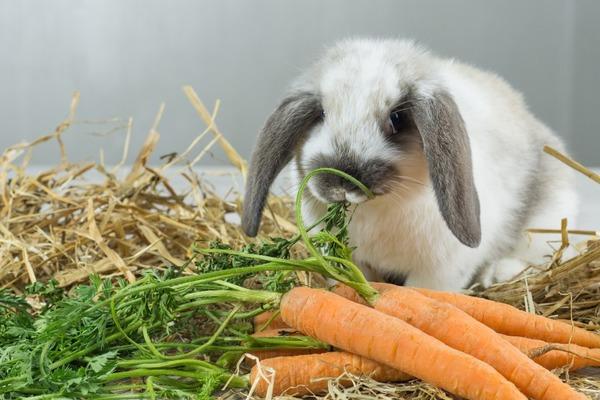 Пища для кролика