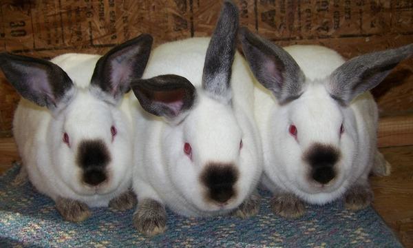 Кролики на продаже