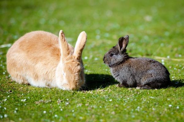 Крольчиха не хочет кроля