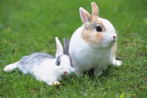Крольчиха не беременеет