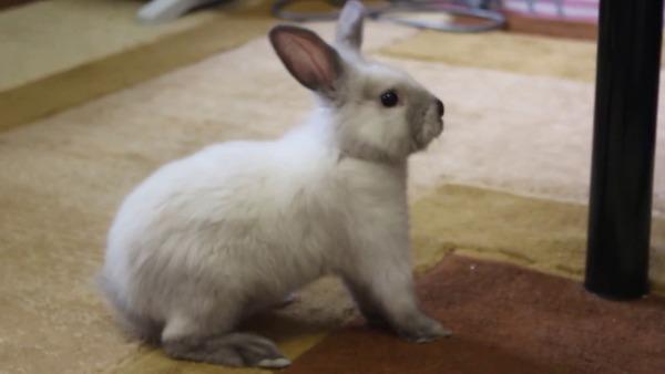 Имена для кроликов девочек и мальчиков