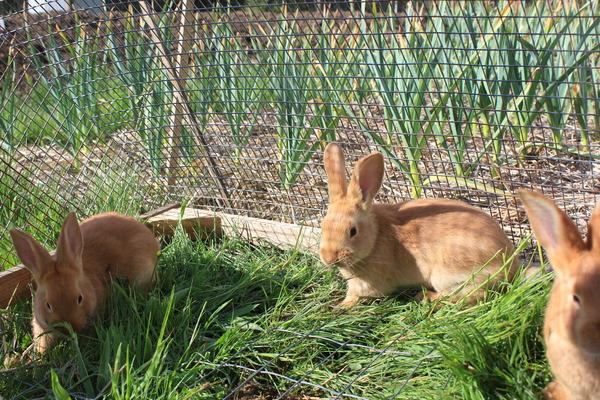 Кролики в безопасности