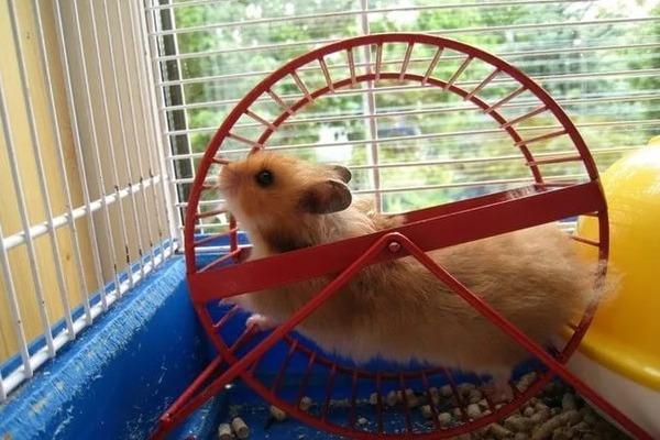 Беговое колесо в клетке