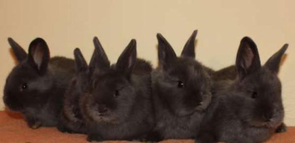 Кролики-малыши после отсаживания