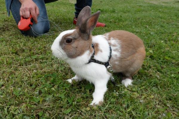 Домашний кролик на природе