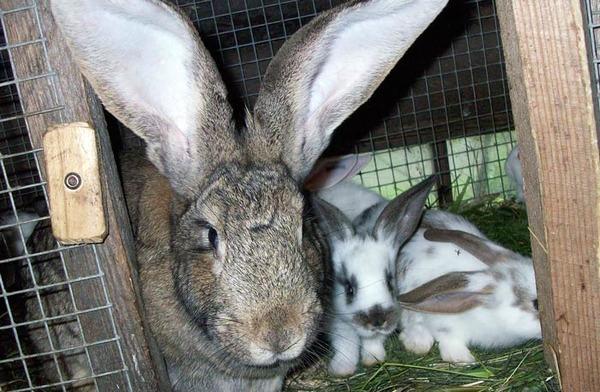 Большой выбор кроликов