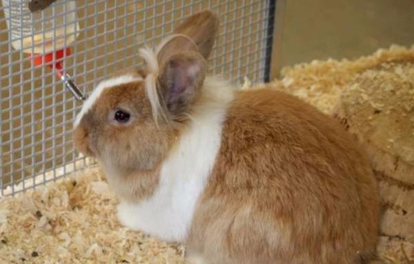 Профилактика — залог здоровья кролика
