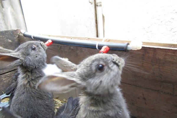 Автопоилки кроликам