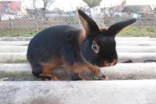 Содержание кролей