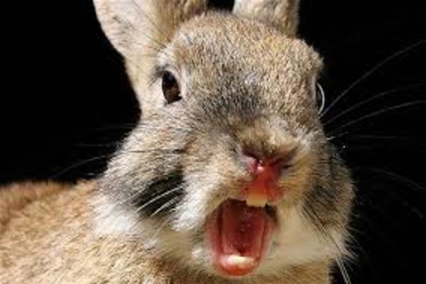 Кусаются ли кролики