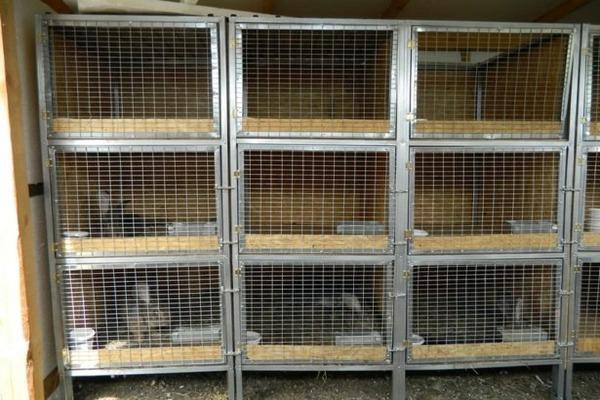 Клетки для калифорнийских кроликов