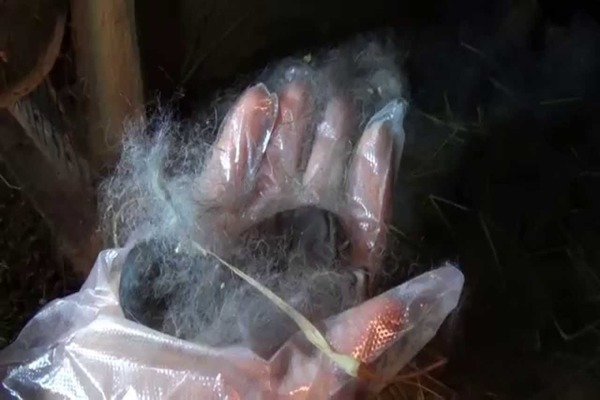 Мертвый крольчонок