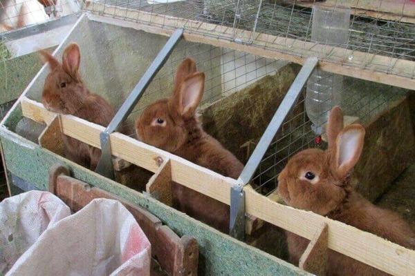 Устройство крольчатника