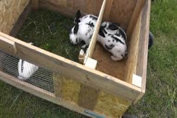 Место содержания беременной крольчихи