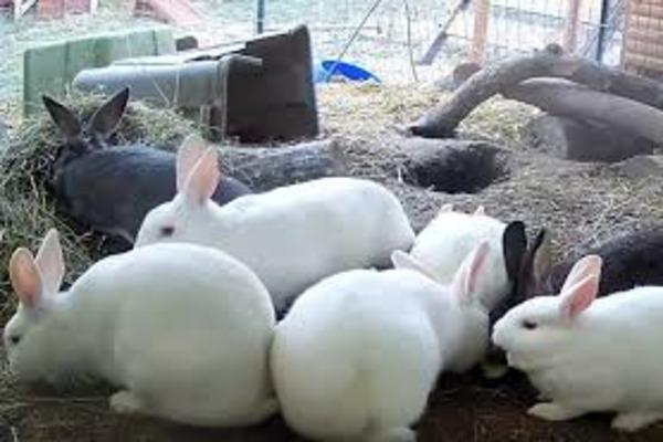 Питомник с кроликами