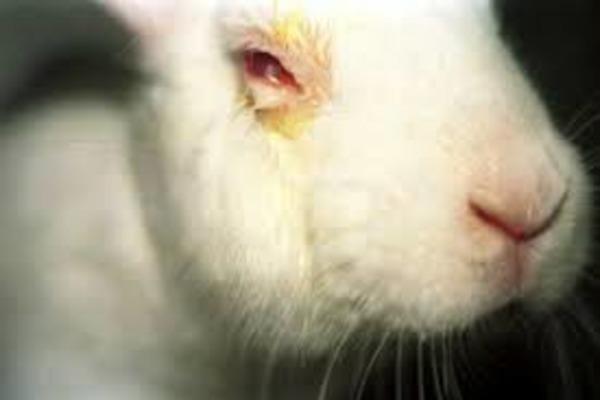 Крольчонок с гноящимся глазом