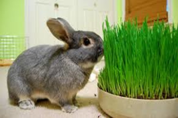 Выбор травы кролику