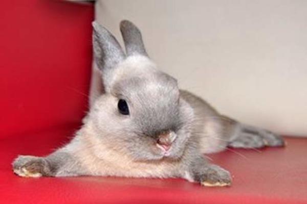 Уход за кроликами-карликами