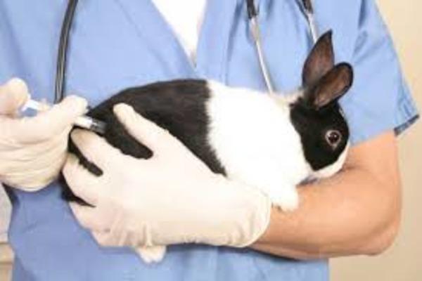 Прививки кролику