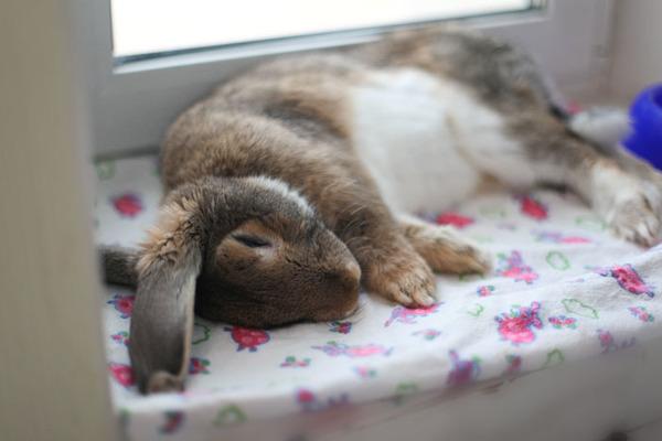 Сон у кролика