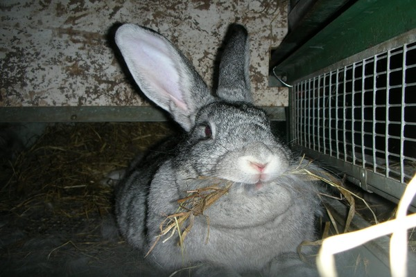 Параметры кроля