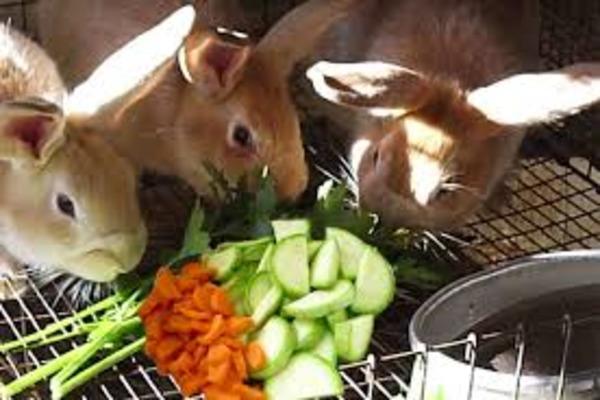 Еда для крольчат