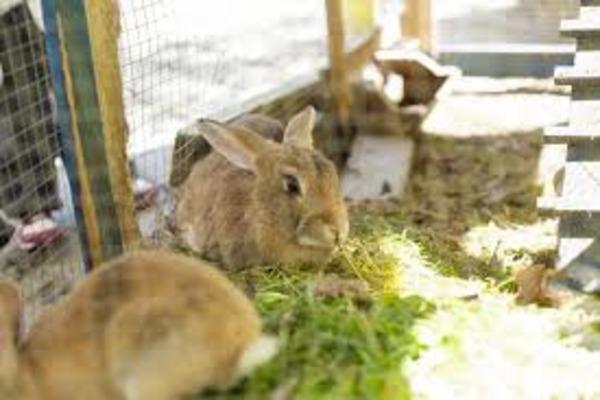 Губительное действие влаги на животных