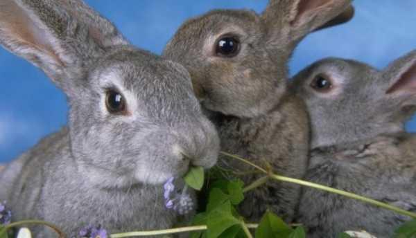 Как научиться не совершать ошибки начинающим кролиководам