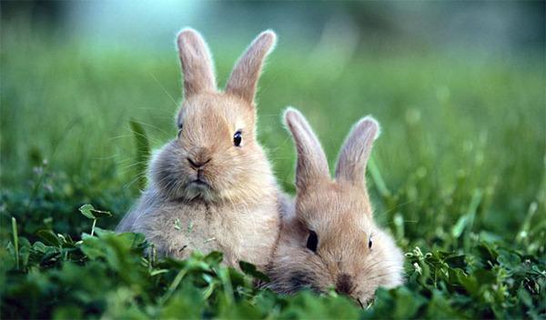 Сложность разведения кроличьего бизнеса