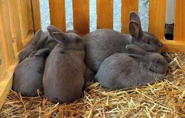 Основные правила для содержания кроликов