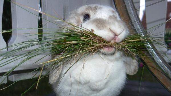 Внешние признаки здорового кроля
