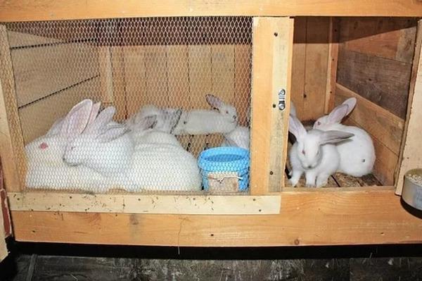 Метод содержания кроликов в клетке