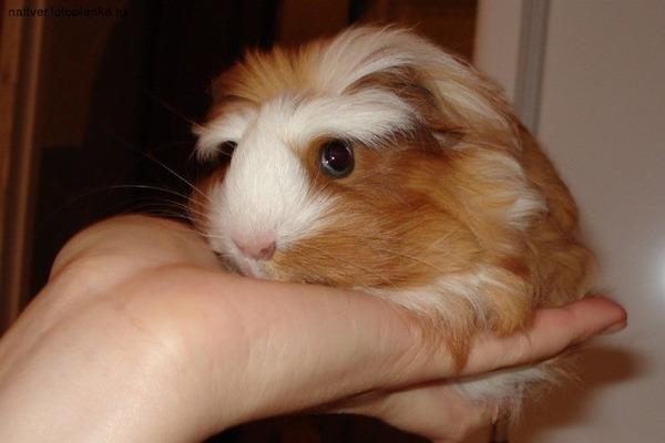 Приучение животного к рукам