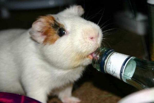 Питомец много пьет