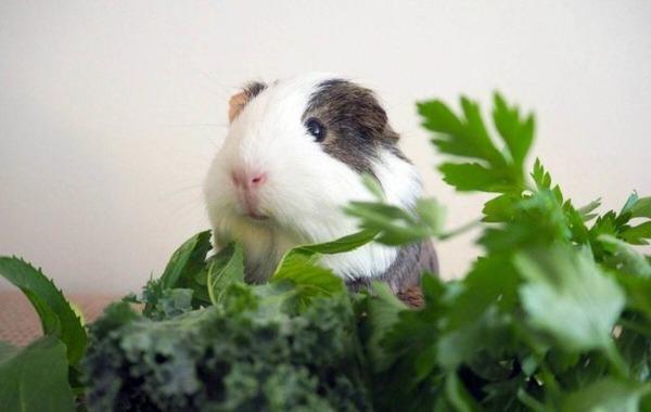 Комнатные цветы - запрещенное лакомство для животных
