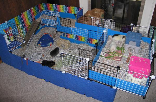 Многофункциональное жилье для грызуна