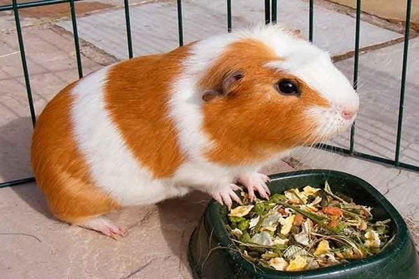 Корректируем питание зверька