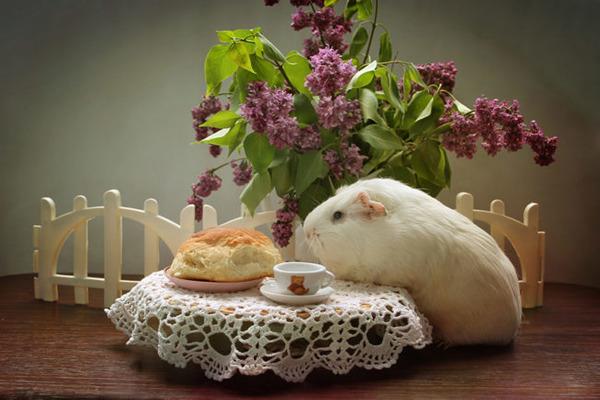 Особенности физиологии грызуна при приеме в пищу хлеба