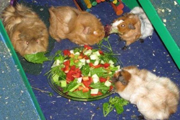 Рацион питания грызунов
