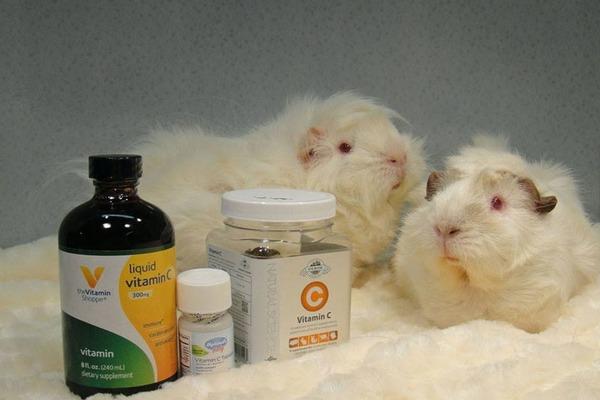 Витамин C для морских свинок