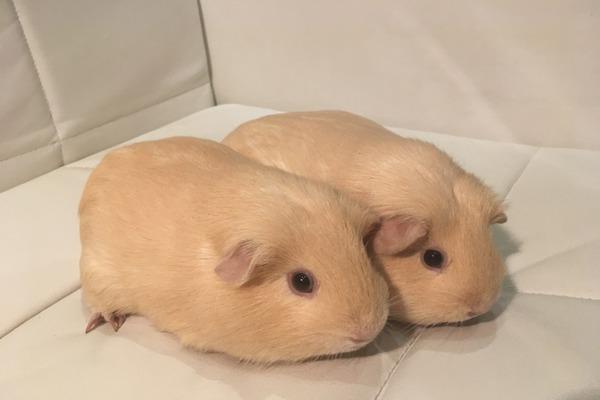 Красавцы близнецы