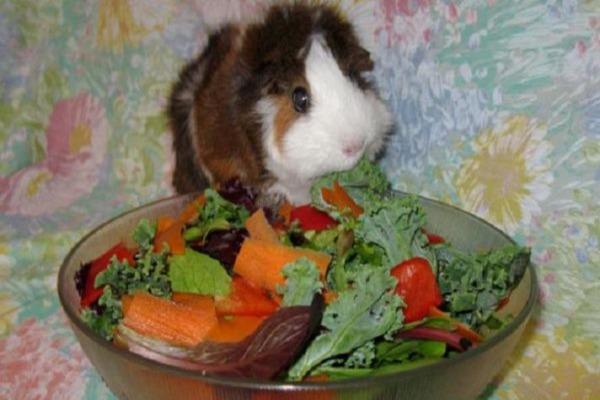В рационе зверька - овощи и ботва
