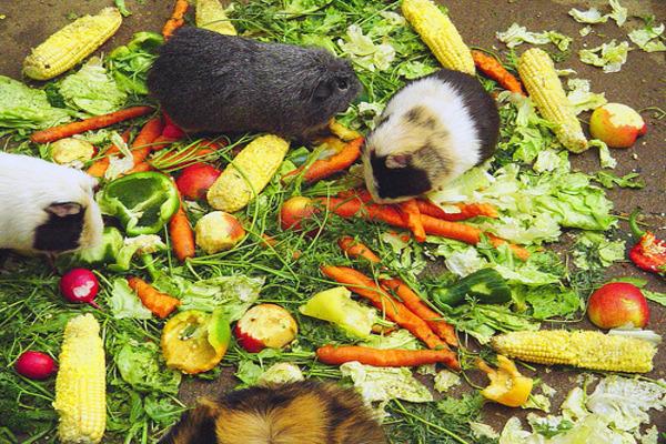 Продукты питания для грызуна