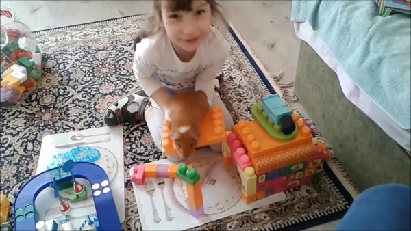 Игры с морской свинкой