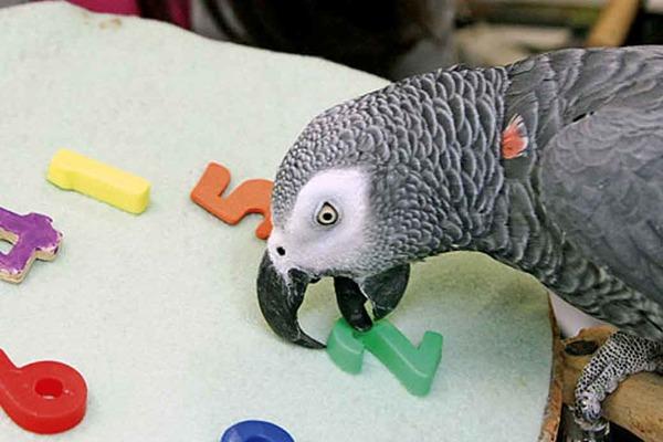 Удивительные птицы и их интеллект