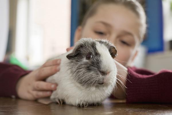 Находим общий язык с животным